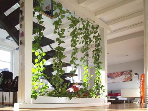 Duplex : FLO_photo végétalisation